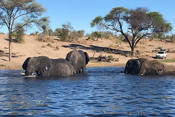 Botswana Safari - Katie Marta - Elephants in Chobe River, Chobe National Park