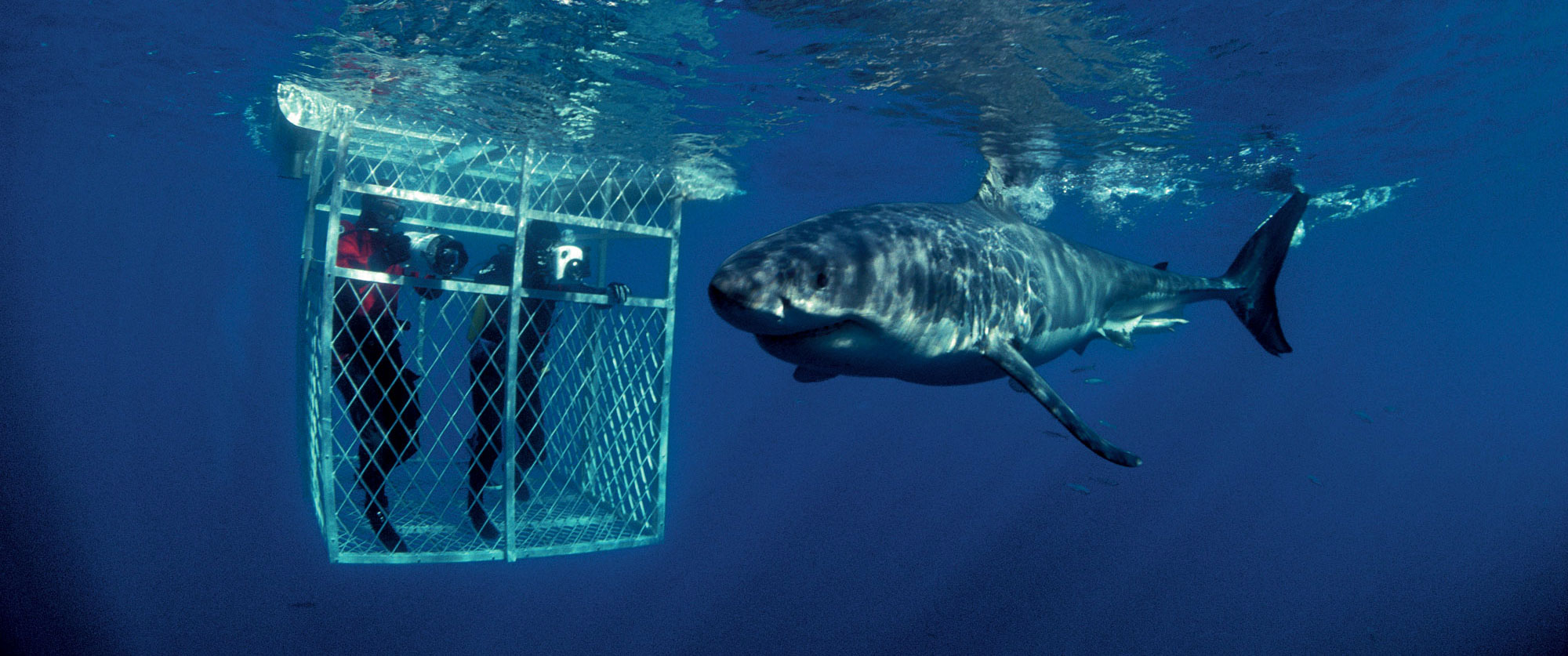 South Africa Great White Shark Cage Diving
