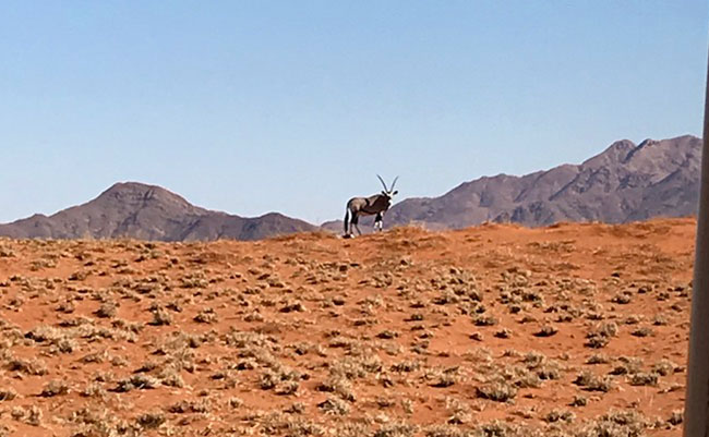 Oryx in Wolwedons Region, Namibia