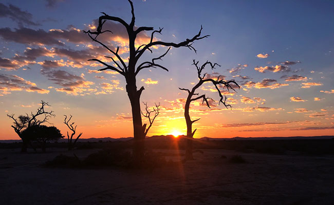 Namibia Sunset with Trees