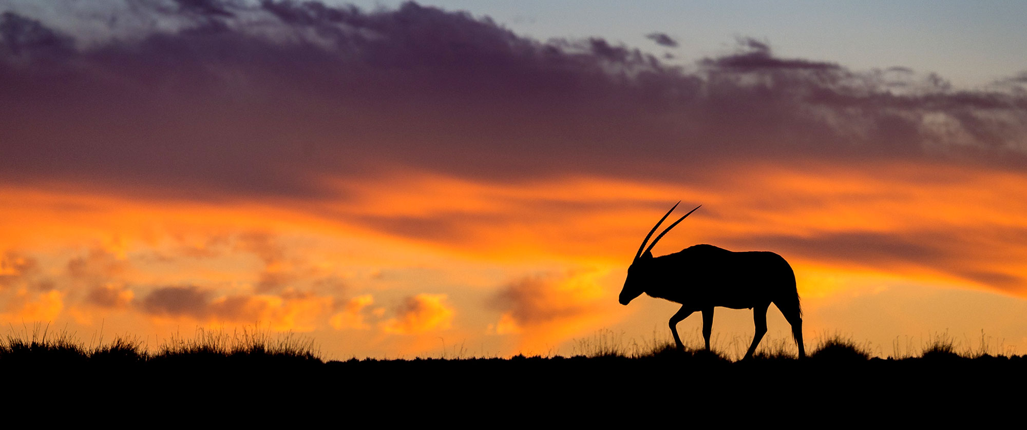 Oryx at Sunset in Namibia - Kulala Desert Lodge