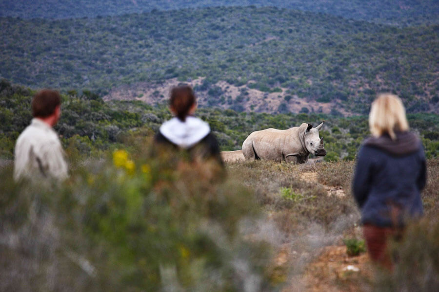 South Africa safari - Rhino on walking safari