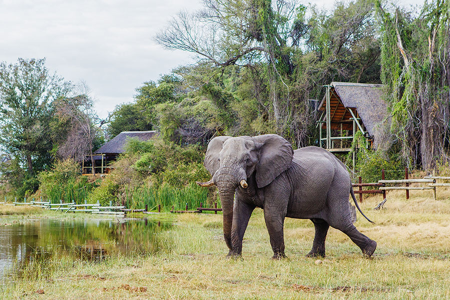 savute-safari-lodge-botswana-elephant
