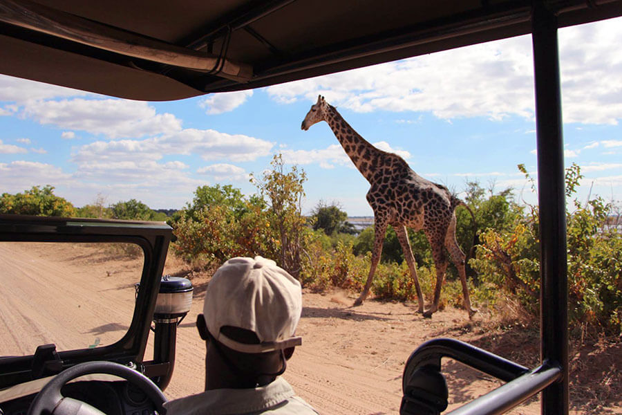 Botswana safari - Giraffe in Chobe