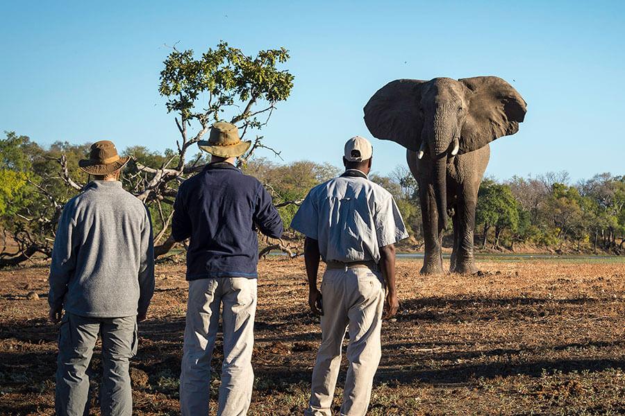 Big 5 safari in Africa - Walking safari with elephant