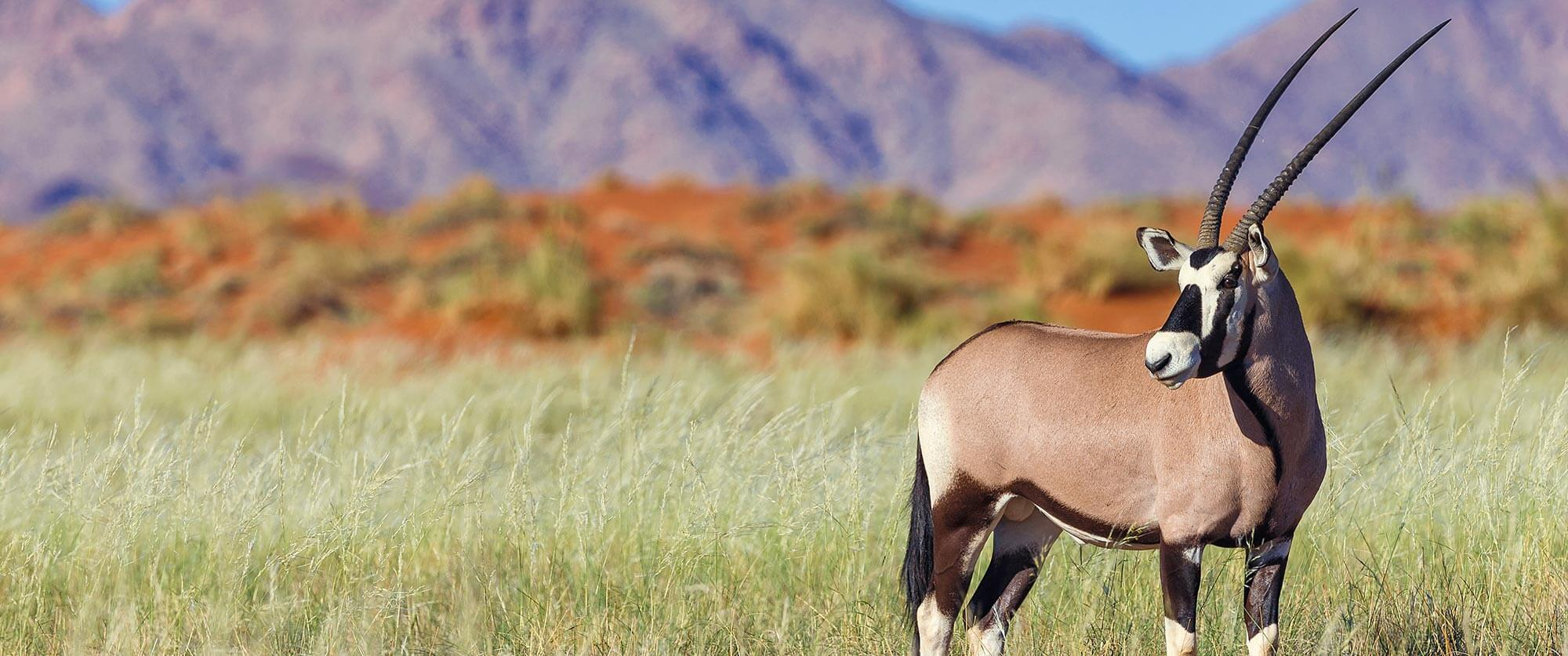 Oryx on Wolwedans Nature Reserve - Namibia Highlights Vacation