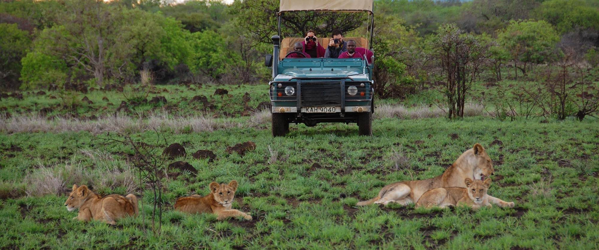Kenya Big 5 Wildlife Safari - Lions on Game Drive - Campi ya Kanzi