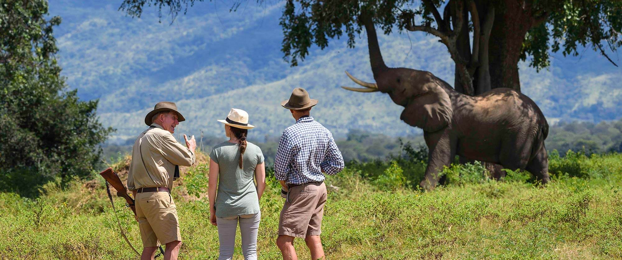 Elephant on Walking Safari - John's Camp Zimbabwe - South Luangwa, Mana Pools, and Victoria Falls Adventure Package
