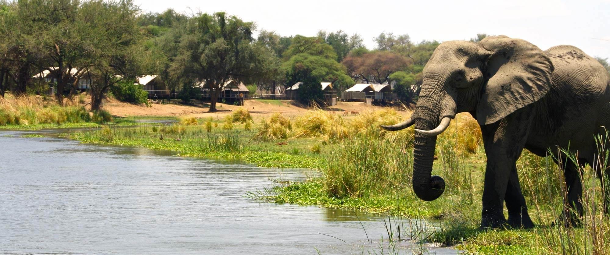 Elephant Drinking at Anabezi Luxury Tented Camp - Wildlife Safari and Beach: Zambia and Lake Malawi Luxury Tour