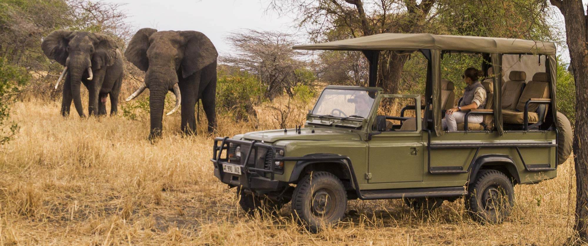 Elephants on Game Drive - Little Chem Chem - Tanzania Safari Tours: Ultimate Northern Circuit Package