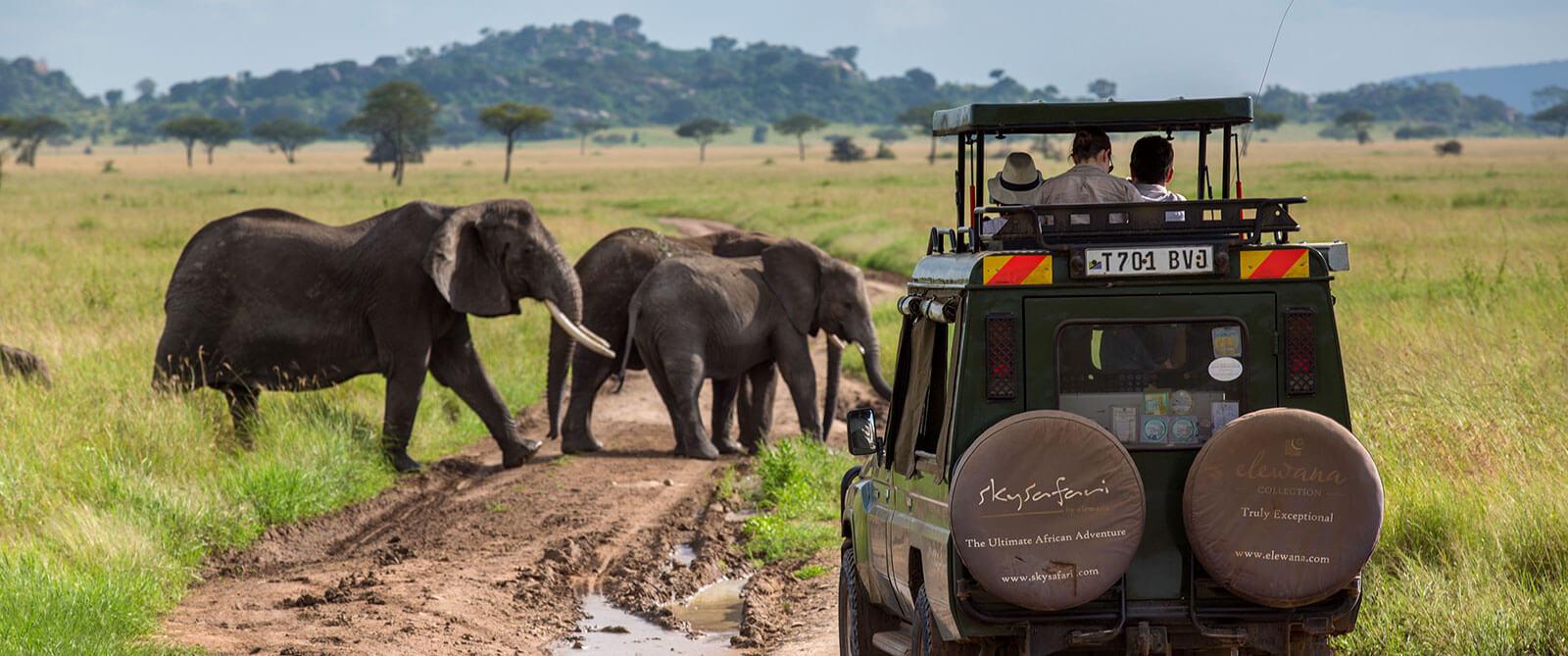 Serengeti Pioneer Camp - Elephants on Big 5 Game Drive - Tanzania Safari Honeymoon