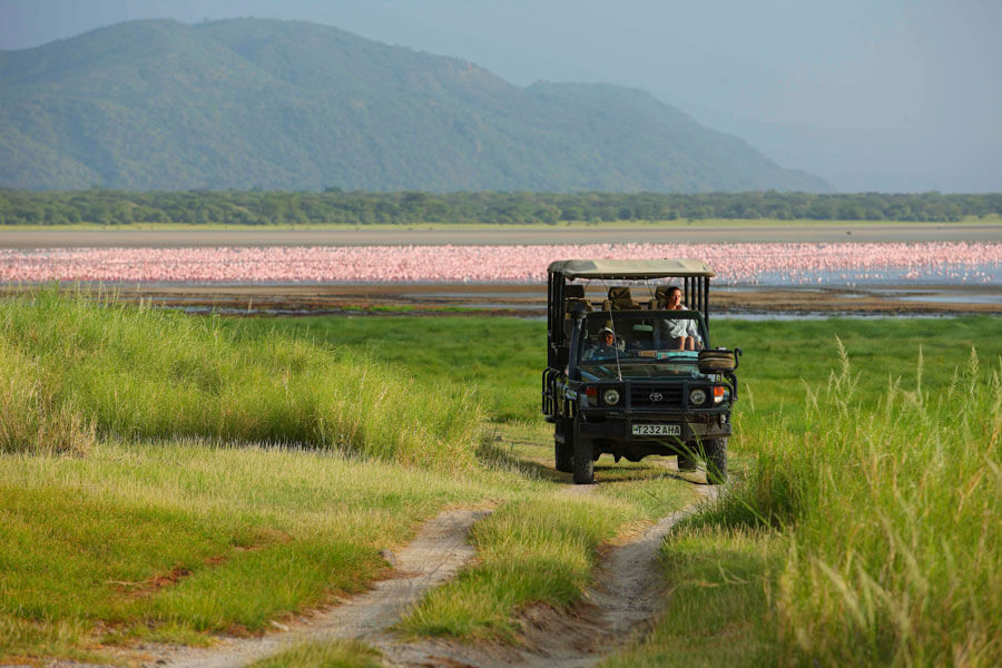 Flamingoes on a Game Drive - Lake Manyara Tanzania - &Beyond Manyara