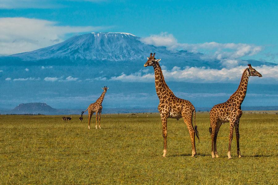 Mt. Kilimanjaro Safari - Amboseli Kenya - Ol Donyo Lodge