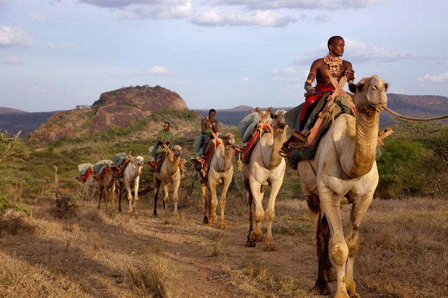 Camel rides - Laikipia Kenya - Ol Malo Lodge
