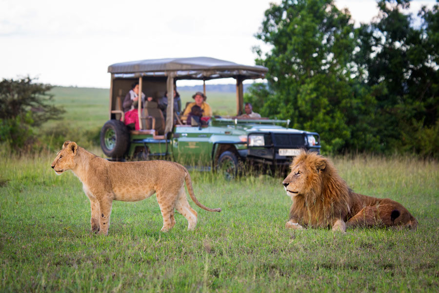 Lions on Great Migration Safari - Masai Mara Kenya - Mara Plains Camp
