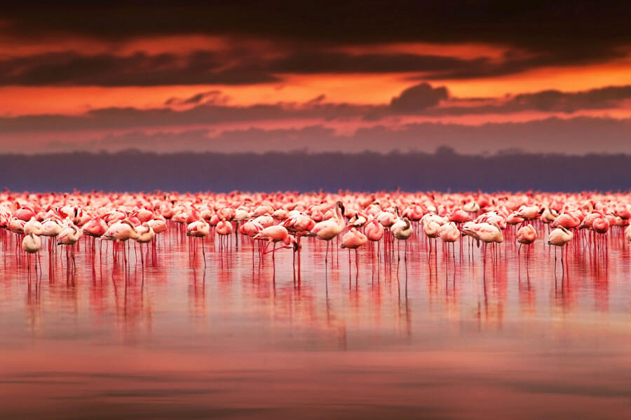 Flamingoes on a lake - Great Rift Valley Kenya