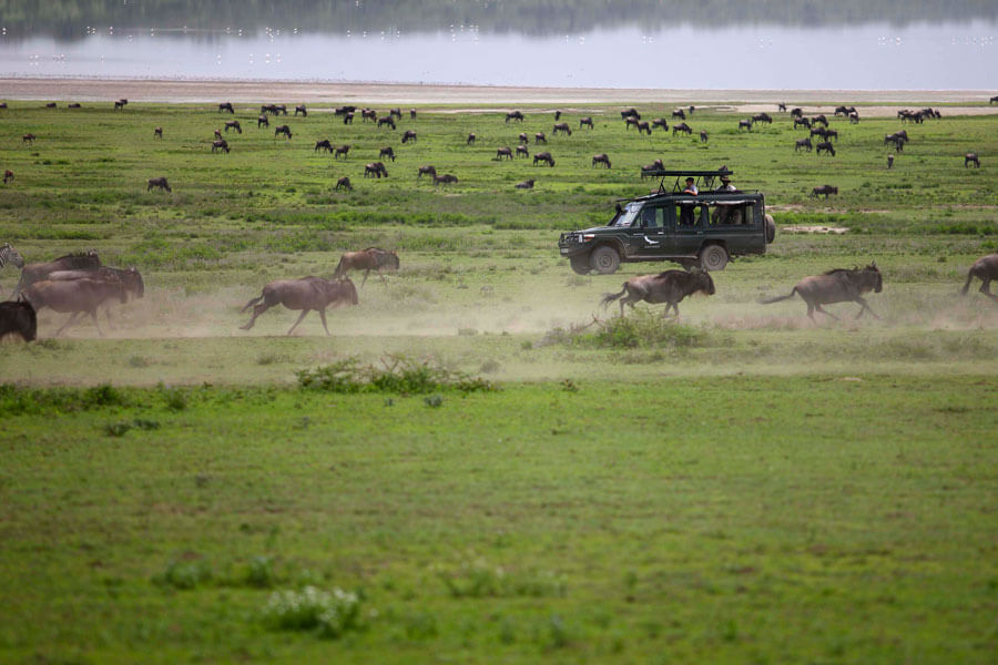 Great Migration Safari - Serengeti Tanzania- &Beyond Grumeti