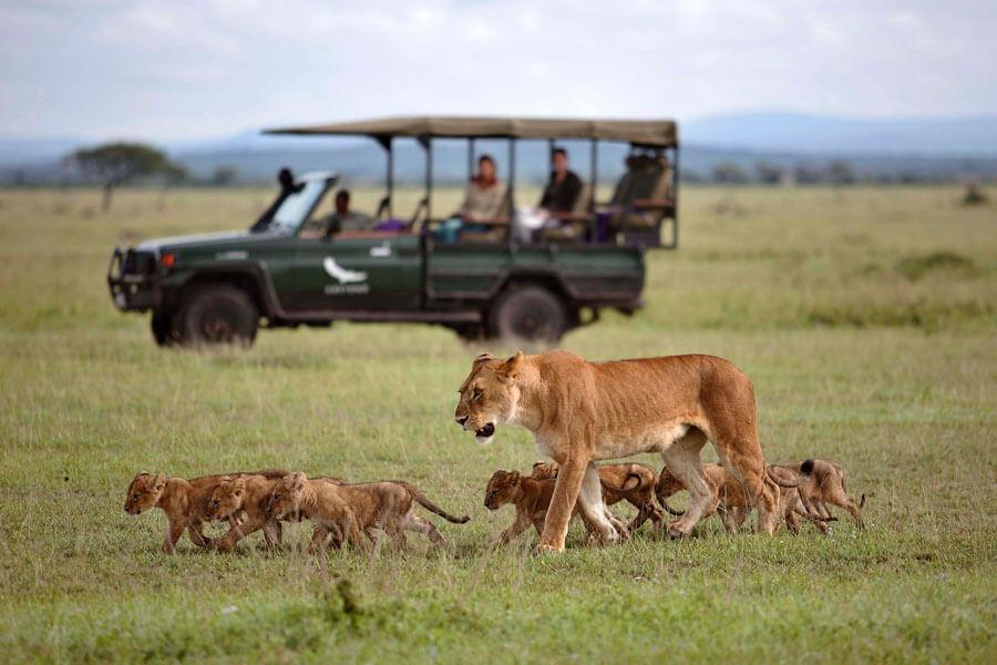 Lions on Serengeti Safari - Serengeti Tanzania - &Beyond Grumeti