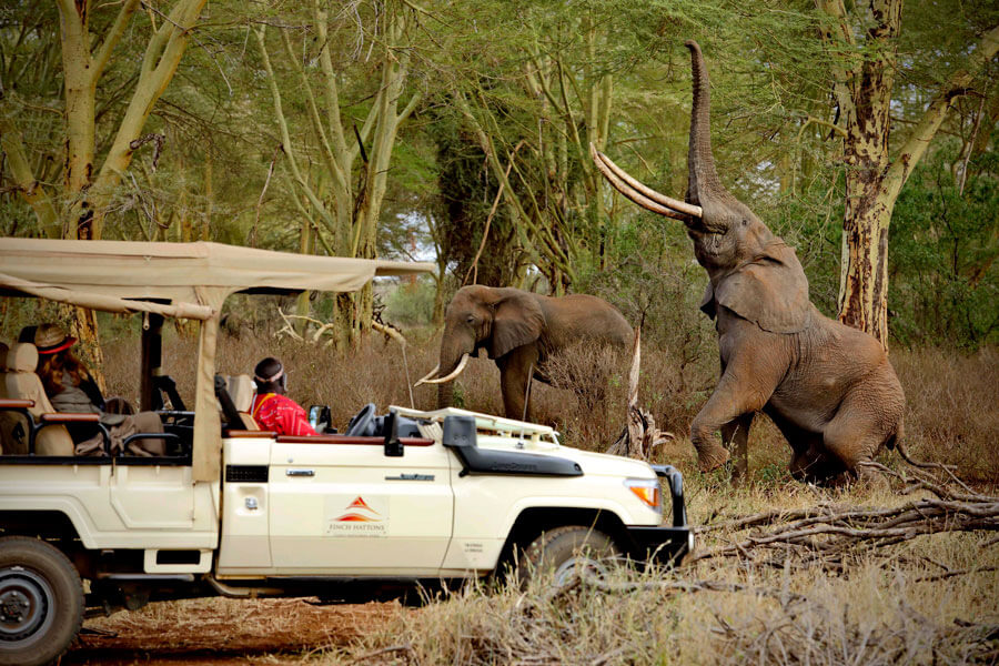 Elephants on Tsavo Safari- Tsavo Kenya - Finch Hattons