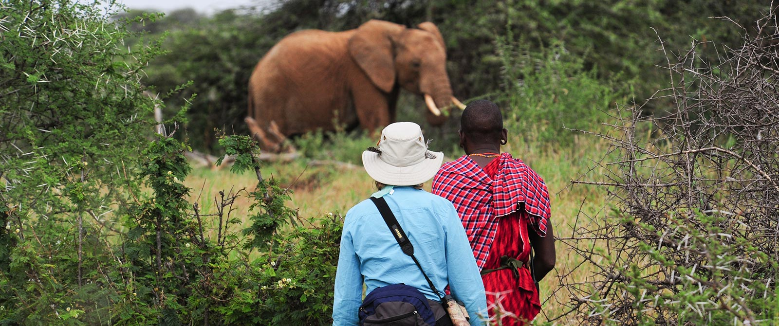 Elephant Spotted on Karisia Walking Safaris - Kenya Walking Safari: A Walk in the Wild Travel Package