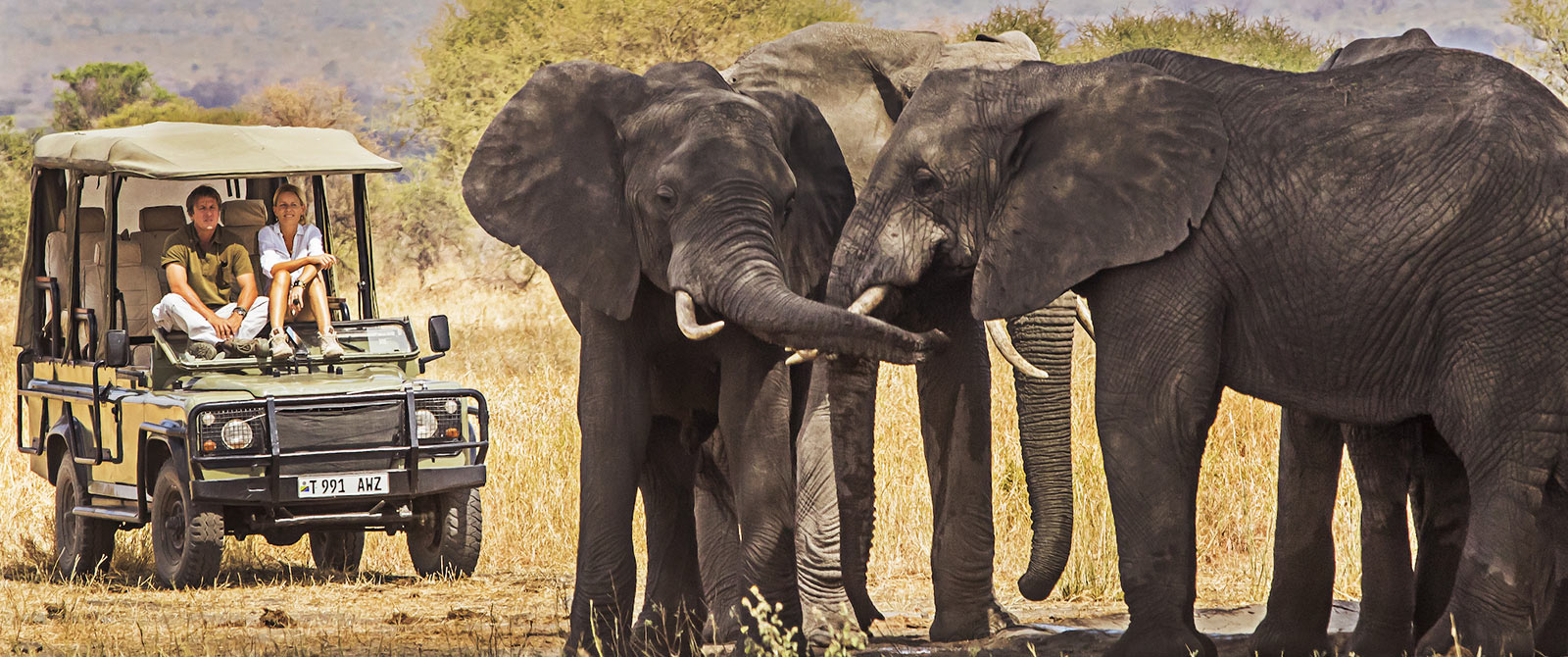Tusker Elephants on Tarangire Game Drive - Little Chem Chem - Tanzania Highlights: Tarangire, Ngorongoro, and Serengeti Safari