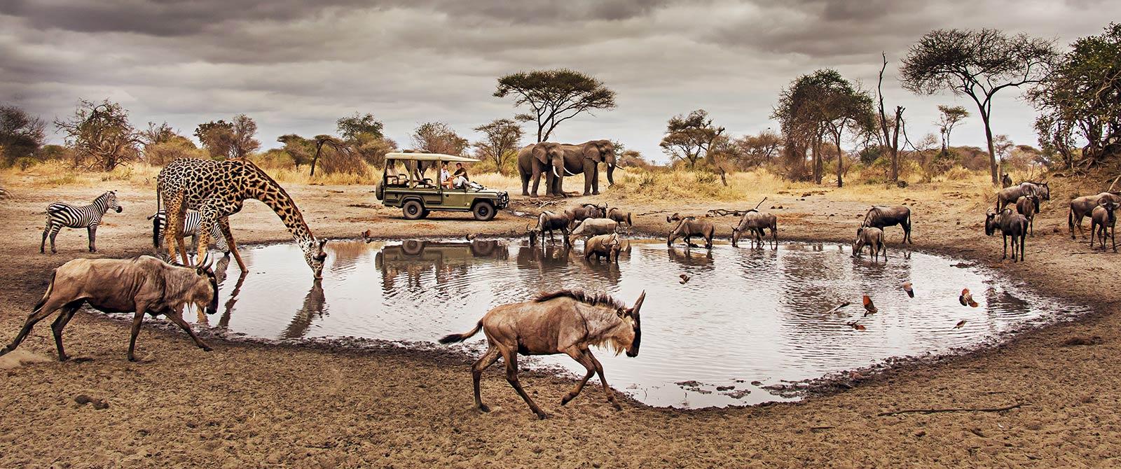 Active Waterhole on Game Drive - Little Chem Chem - Tanzania Highlights: Tarangire, Ngorongoro, and Serengeti Safari