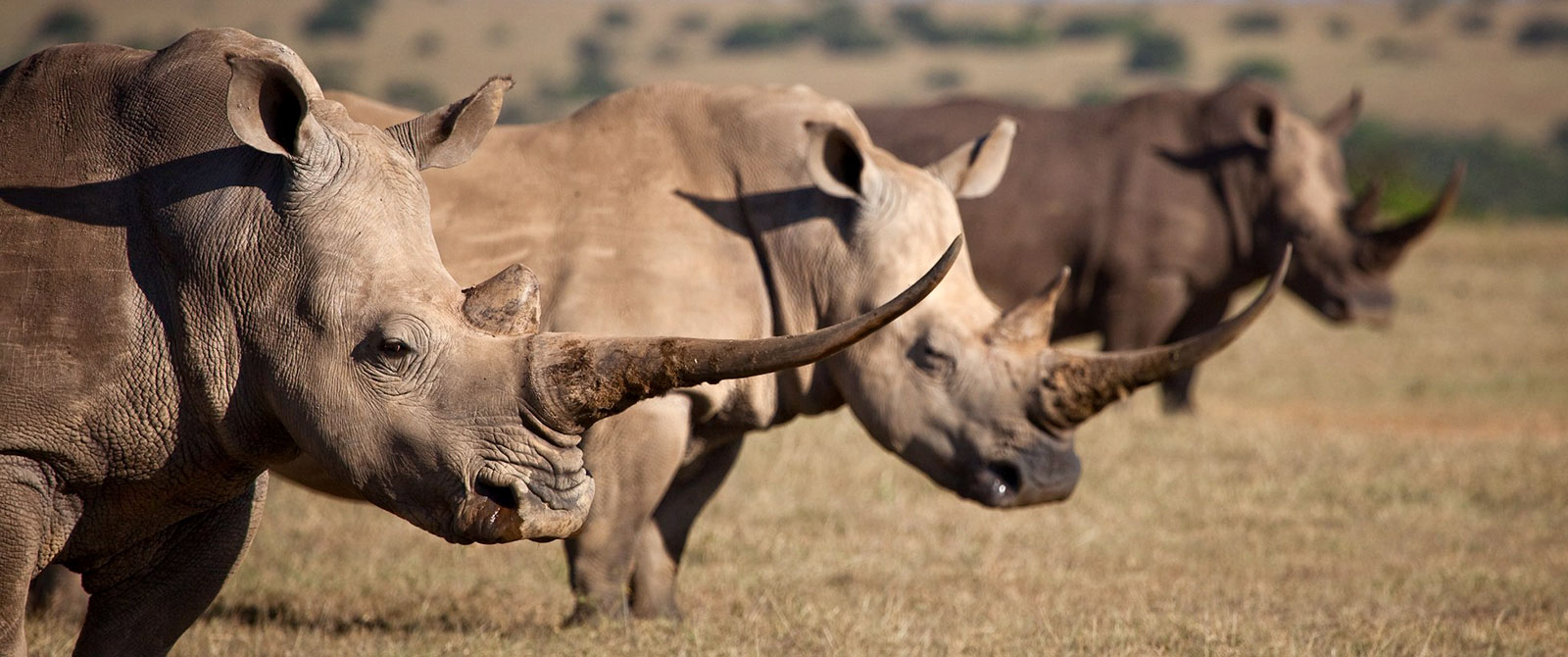 Kenya Safaris - Rhinos on Solio Game Conservancy - Romantic Kenya: Giraffe Manor and Masai Mara Safari