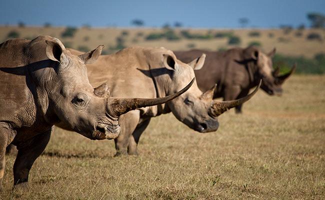 African Safari Photography Tips - Rhinos in Kenya