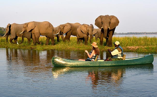 Elephants on a Zambezi River Canoe Safari