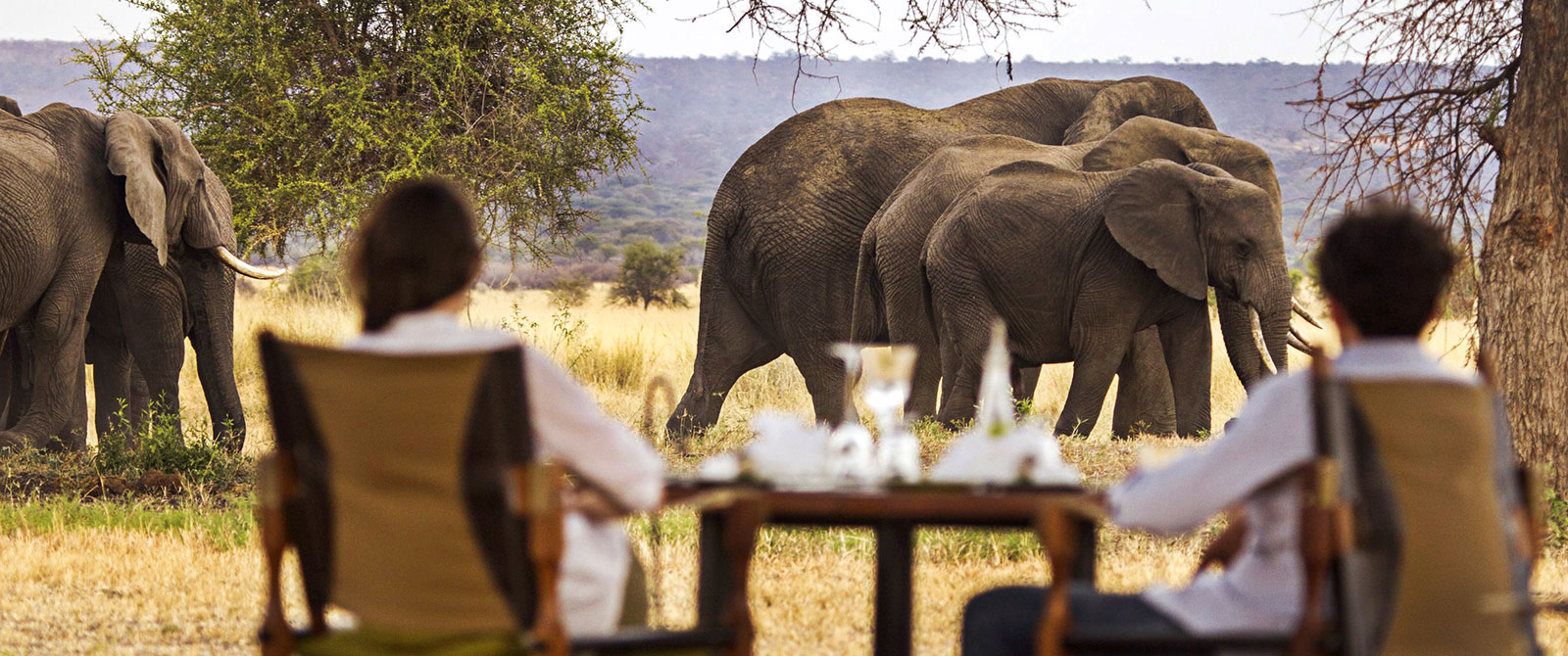 See Wild Elephants at Breakfast - Little Chem Chem - East African Safari: Kenya and Tanzania Luxury Tour