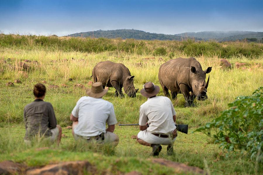 Rhinos on a South Africa Walking Safari