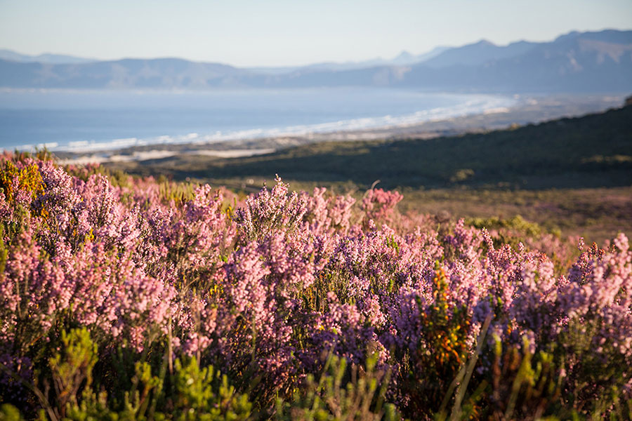 Wildflowers in August - Best Month to Visit South Africa