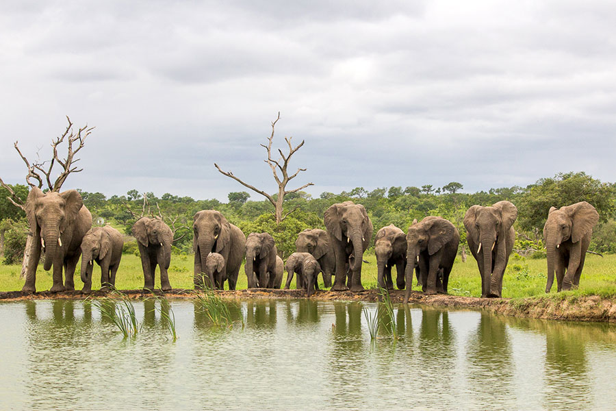 Elephants Around a Waterhole