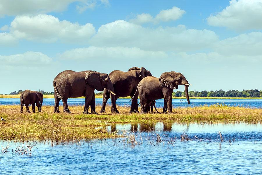 Elephants in the Okavango Delta, Botswana - Luxury Botswana Safari Tours