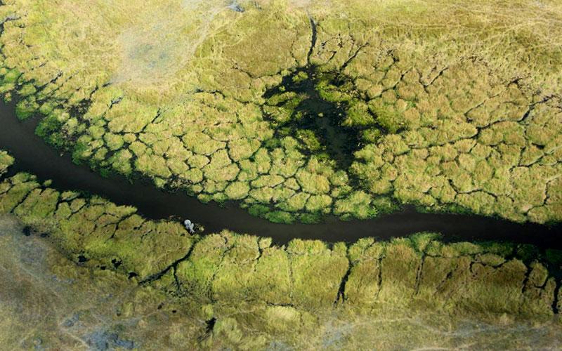 Aerial View of Okavango Delta - Ellen Hoffman, Africa Travel Agent