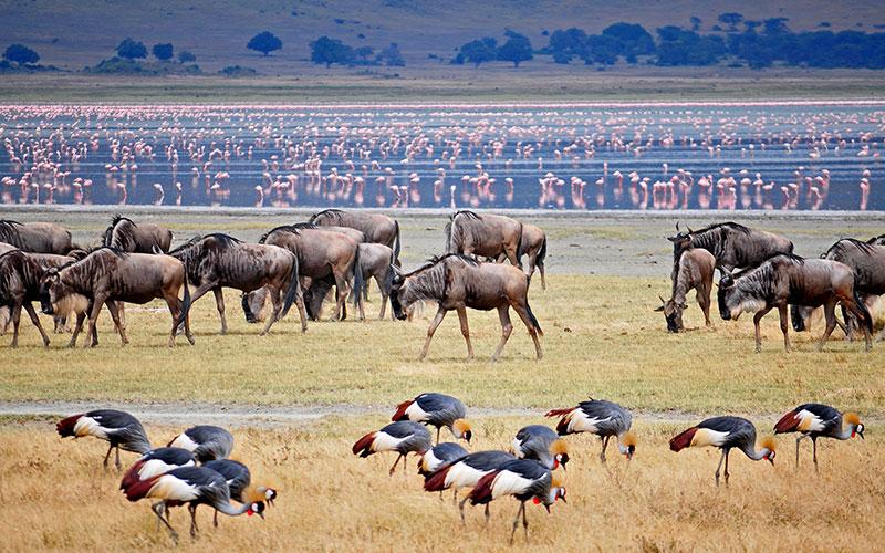 Wildlife at Ngorongoro Crater Tanzania