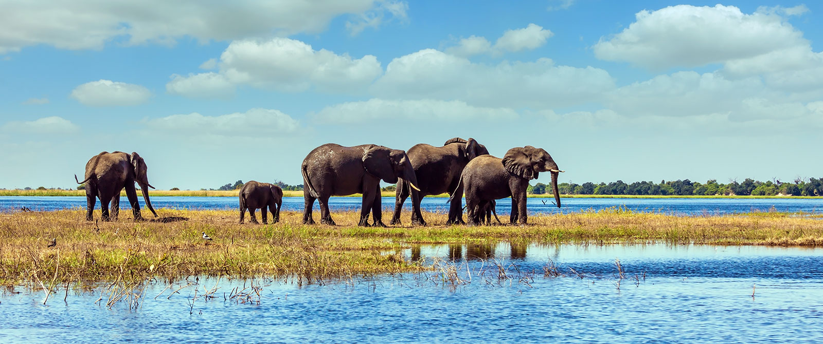 Elephants in Chobe National Park - Zambezi Queen River Cruise