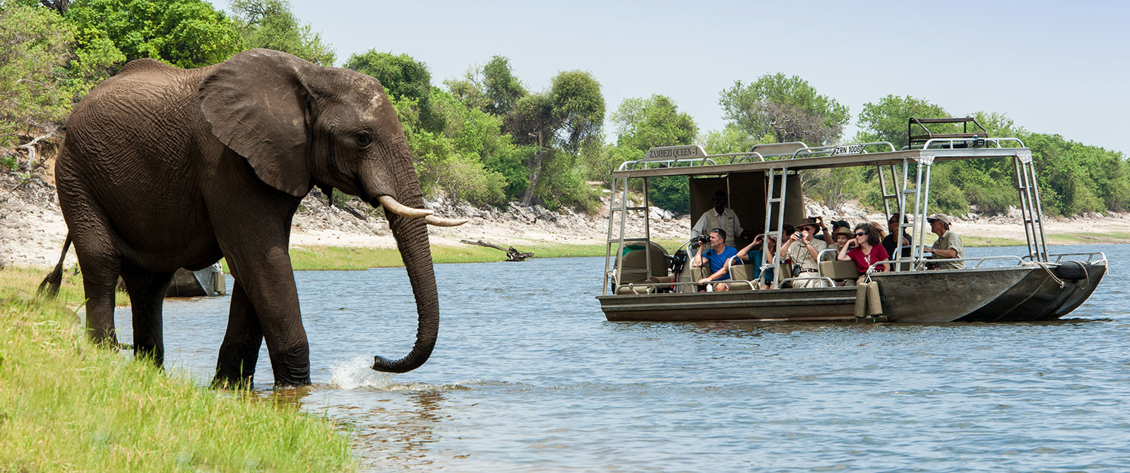 Elephant in the Chobe River - Excursion from Zambezi Queen River Cruise