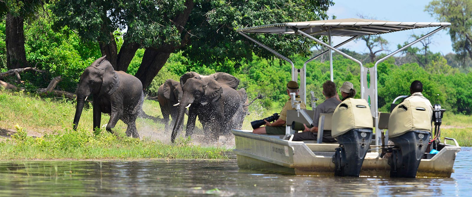 Elephants in the Chobe River - Excursion from Zambezi Queen River Cruise