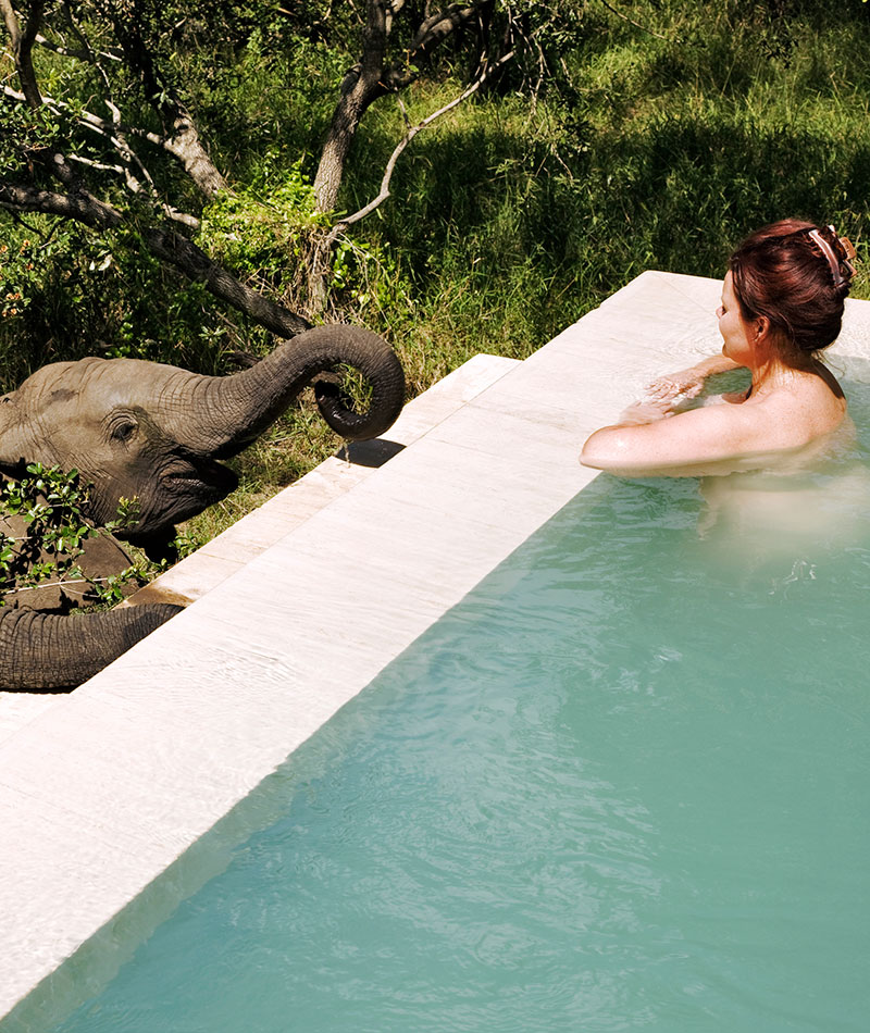 Greeting Elephants at the Pool at Royal Malewane - Best South Africa Safari Tours
