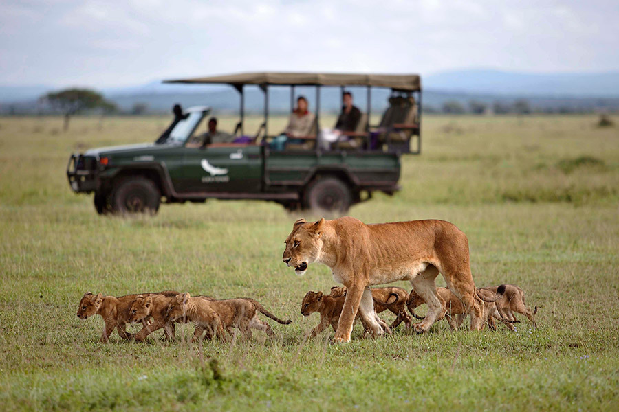 Lioness and cubs in the Serengeti