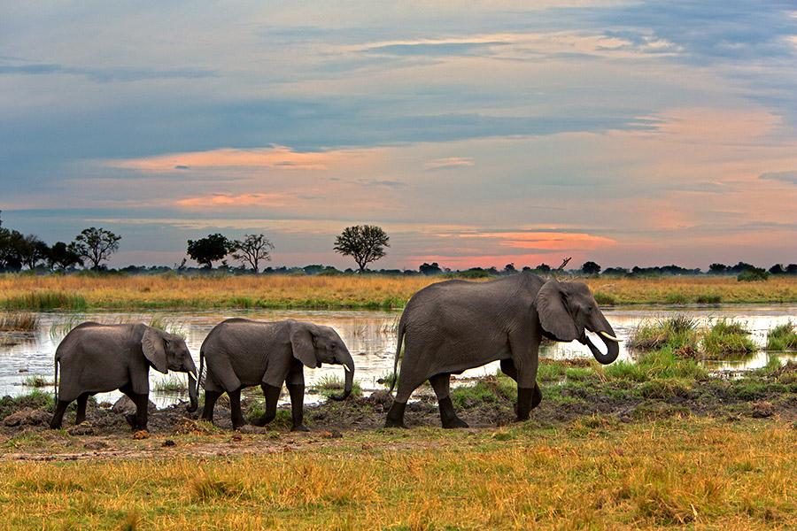Elephants seen on an Okavango Delta safari