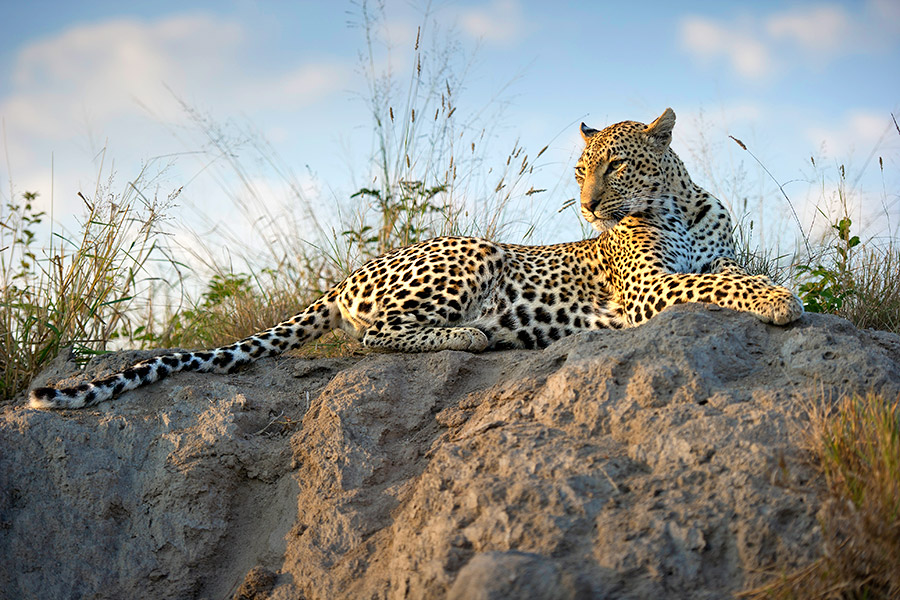 Best Safaris in Africa - Top 5 Safari Tours - Best Africa Safari Travel Agency