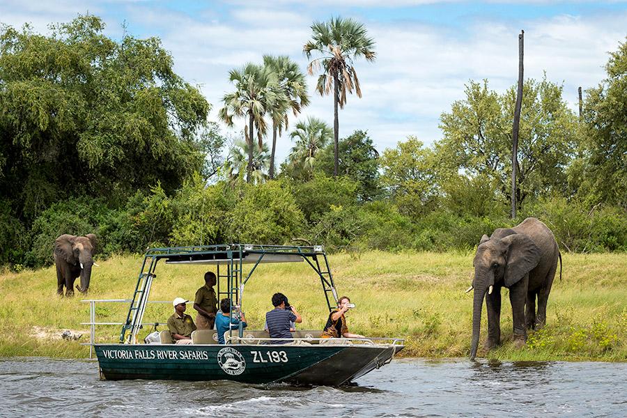 Elephants seen on a river safari in Victoria Falls