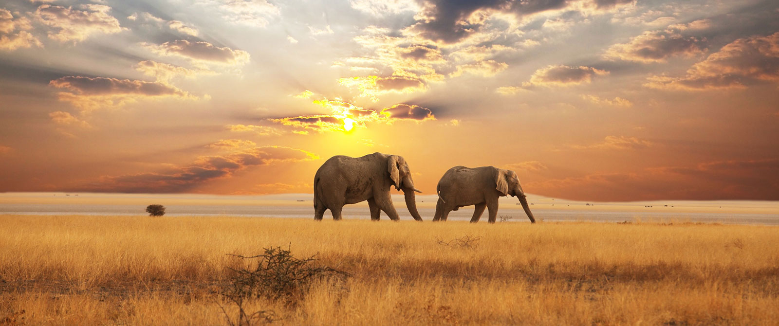 Elephants at Sunset in the Savannah