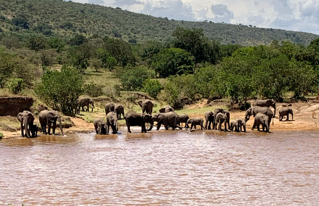 Elephants in Front of Karen Blixen Camp in the Masai Mara