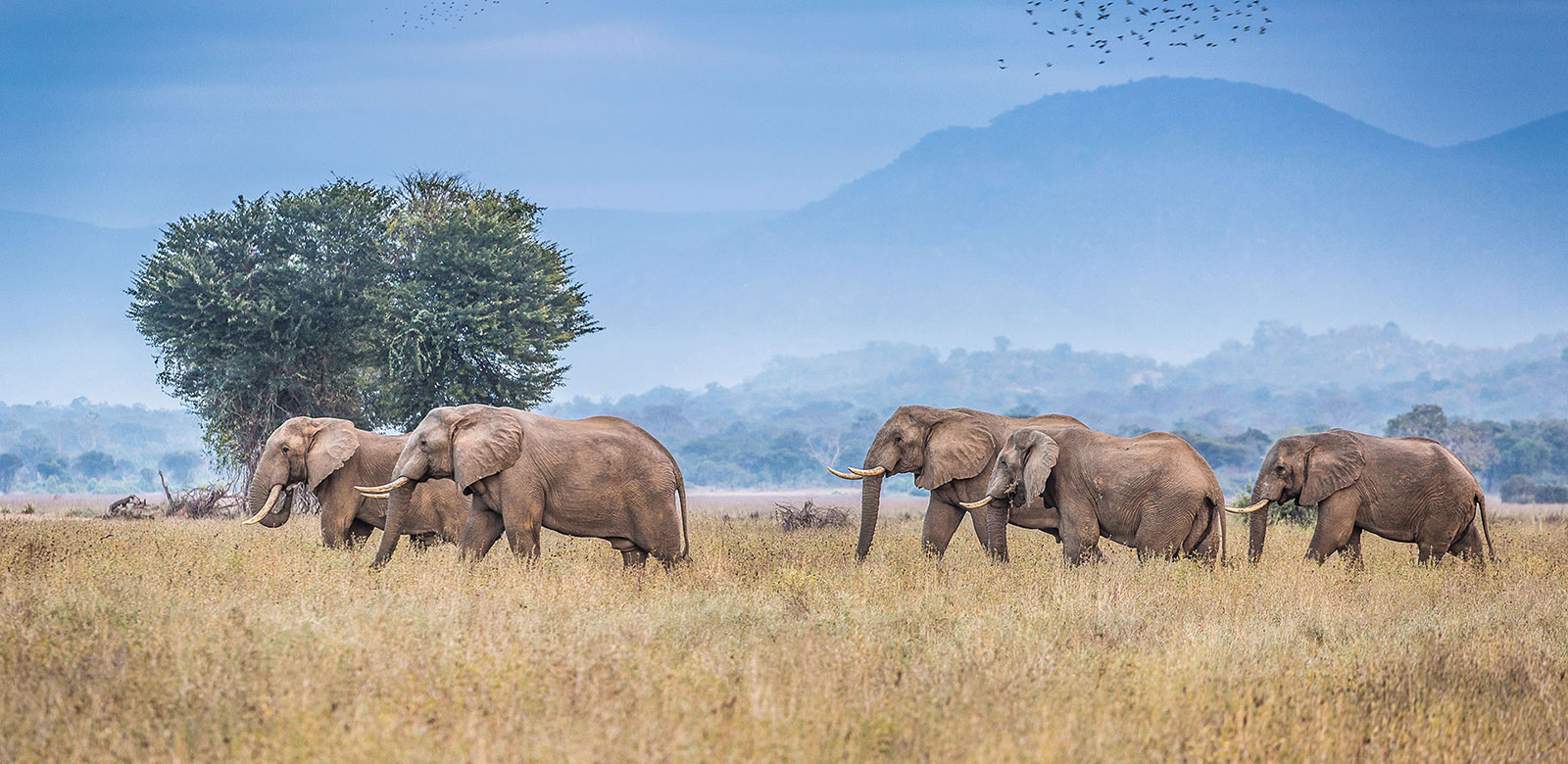 Best African Safari Travel Agency - Africa Endeavours