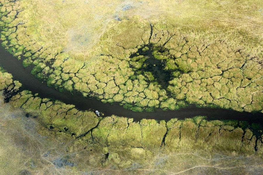 Okavango Delta Safaris - Best Botswana Safari Travel Agency
