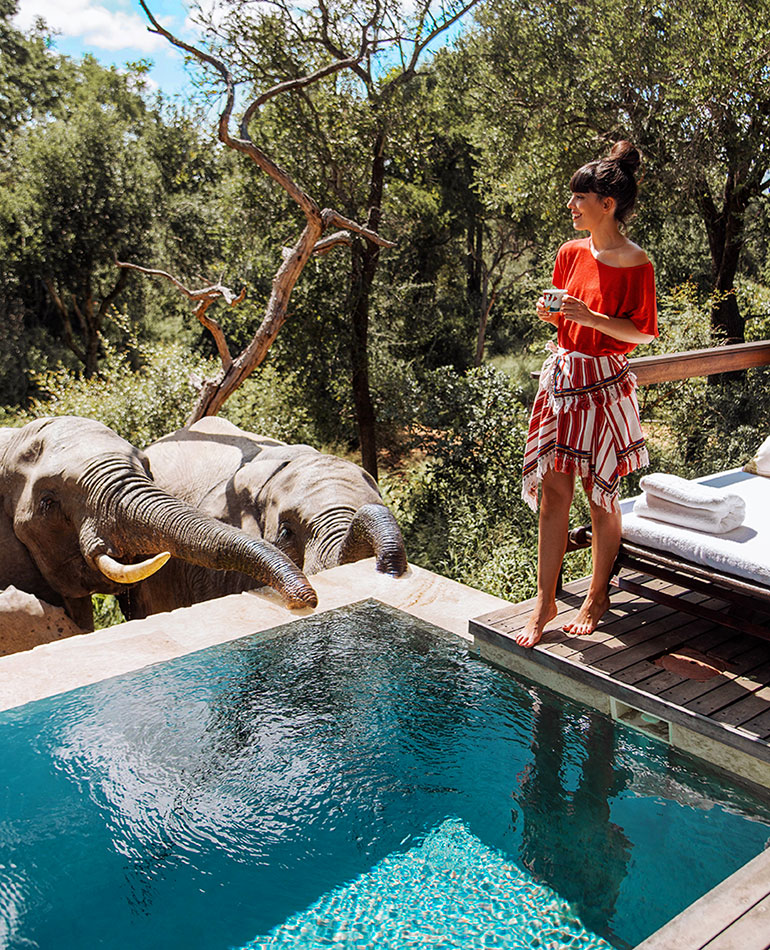Elephants at the Pool - 5 Star South Africa Safari Lodges - Royal Malewane