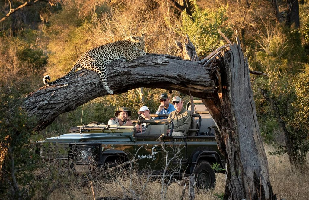 Leopard in Mala Mala Game Reserve - South Africa Luxury Safari Vacations